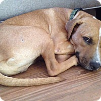 Adopt A Pet :: Dash - Jacksonville, FL