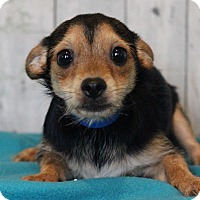 Adopt A Pet :: Dukum - Waldorf, MD