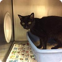 Adopt A Pet :: Blair - Janesville, WI