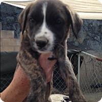 Adopt A Pet :: Portia - BONITA, CA