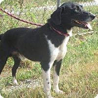 Adopt A Pet :: Sam - Canton, OH