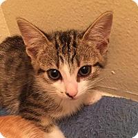 Adopt A Pet :: Bronwyn - Los Angeles, CA