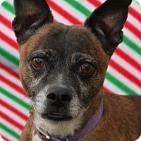 Terrier (Unknown Type, Small) Mix Dog for adoption in Las Vegas, Nevada - Patsy Cline