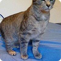 Adopt A Pet :: calvin - McArthur, OH