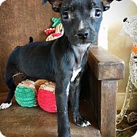 Adopt A Pet :: Zinnia - Fredericksburg, TX
