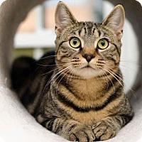 Adopt A Pet :: Brewster - Ashland, MA