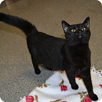 Adopt A Pet :: Scarlett - Michigan City, IN