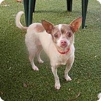 Adopt A Pet :: Princess - Bonney Lake, WA