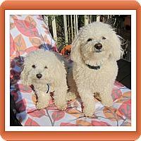 Adopt A Pet :: Pending!!Primo & Secondo - IL - Tulsa, OK