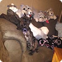 Adopt A Pet :: Louie ~ ADOPTION PENDING - Winter Haven, FL