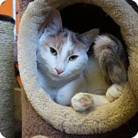 Adopt A Pet :: Paisley - West Des Moines, IA
