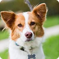 Adopt A Pet :: Cascade - San Diego, CA