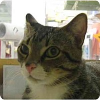 Adopt A Pet :: Do Dad - Jenkintown, PA