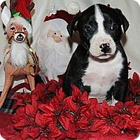 Adopt A Pet :: Paul - Costa Mesa, CA