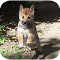 Adopt A Pet :: Hana - Antioch, IL