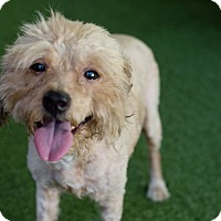 Adopt A Pet :: Lenny - Mission Viejo, CA
