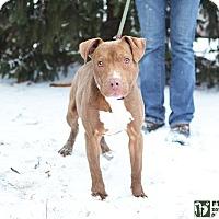Adopt A Pet :: Whiz - Springfield, IL