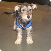 Adopt A Pet :: Bonnie - Adoption Pending - Gig Harbor, WA