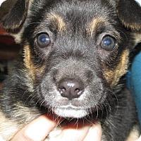 Adopt A Pet :: Heidi - Rocky Mount, NC