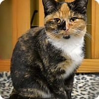 Adopt A Pet :: Kimmie - Byron Center, MI