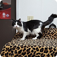 Adopt A Pet :: Zorro - Keokuk, IA