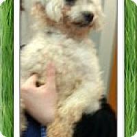 Adopt A Pet :: Finley - OH - Tulsa, OK