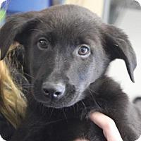 Adopt A Pet :: Baby Edgar - Rockville, MD