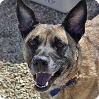 Adopt A Pet :: Callie - Meridian, ID