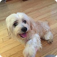 Adopt A Pet :: Sunshine - Windermere, FL