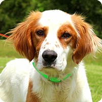 Adopt A Pet :: Bradley~adopted! - Glastonbury, CT