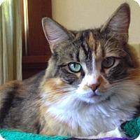 Adopt A Pet :: Midge - Novato, CA