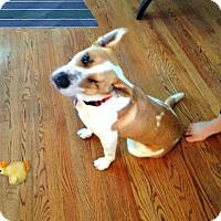 Adopt A Pet :: Mr Lucky - Redondo Beach, CA