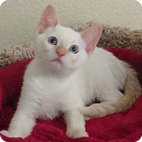Adopt A Pet :: Marie - North Highlands, CA
