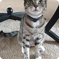 Adopt A Pet :: Kida - Berkeley Hts, NJ