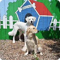 Adopt A Pet :: Oxanna - Pacific, MO