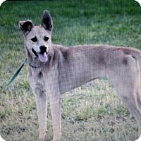 Adopt A Pet :: Auri - Sanford, FL