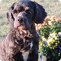 Adopt A Pet :: Jet - Anderson, SC