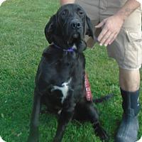 Adopt A Pet :: Rocky - Somerset, PA