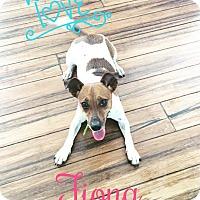 Adopt A Pet :: Fiona - Cincinnati, OH