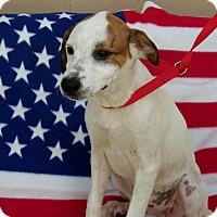 Adopt A Pet :: Sasha - Jacksonville, TX