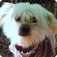 Adopt A Pet :: CLINK - Anderson, SC