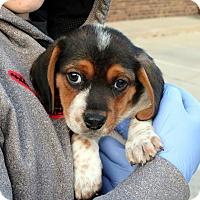 Adopt A Pet :: Mikey - Sugar Grove, IL