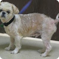 Adopt A Pet :: Buddy - Gary, IN