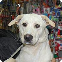 Adopt A Pet :: Capser - Brooklyn, NY
