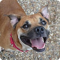 Adopt A Pet :: Buster - Rockford, IL