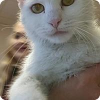 Adopt A Pet :: Leona - Gadsden, AL