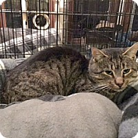 Adopt A Pet :: Boomerang - Spring Brook, NY