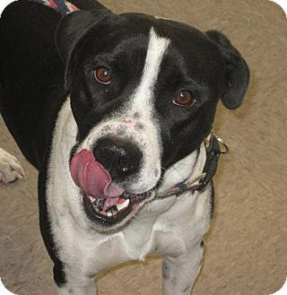 carter adopted dog gardnerville nv border collie