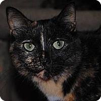 Adopt A Pet :: Bella - Marion, WI