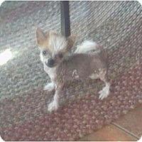 Adopt A Pet :: Einstein - Lexington, TN